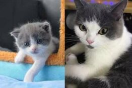Garlic 2.0 Is China's First Cloned Kitten