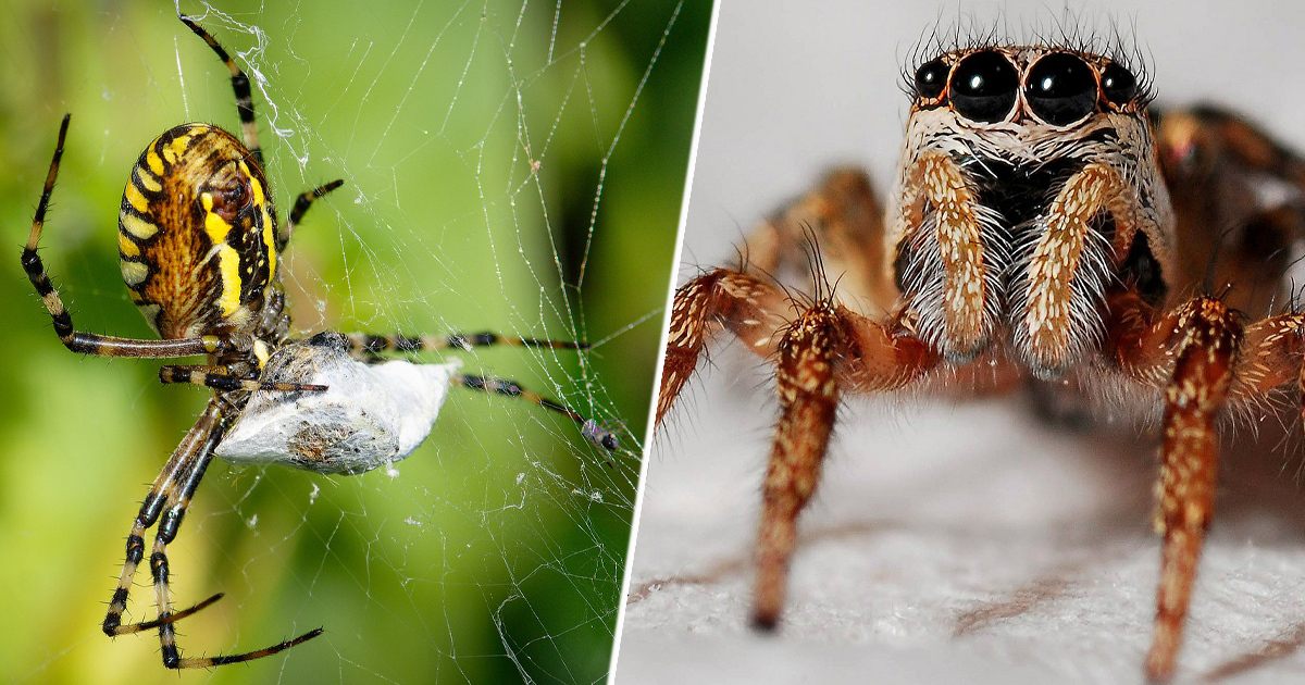 Woman Shares Bizarre Mint Leaf Hack To Keep Spiders Out Of Your Home