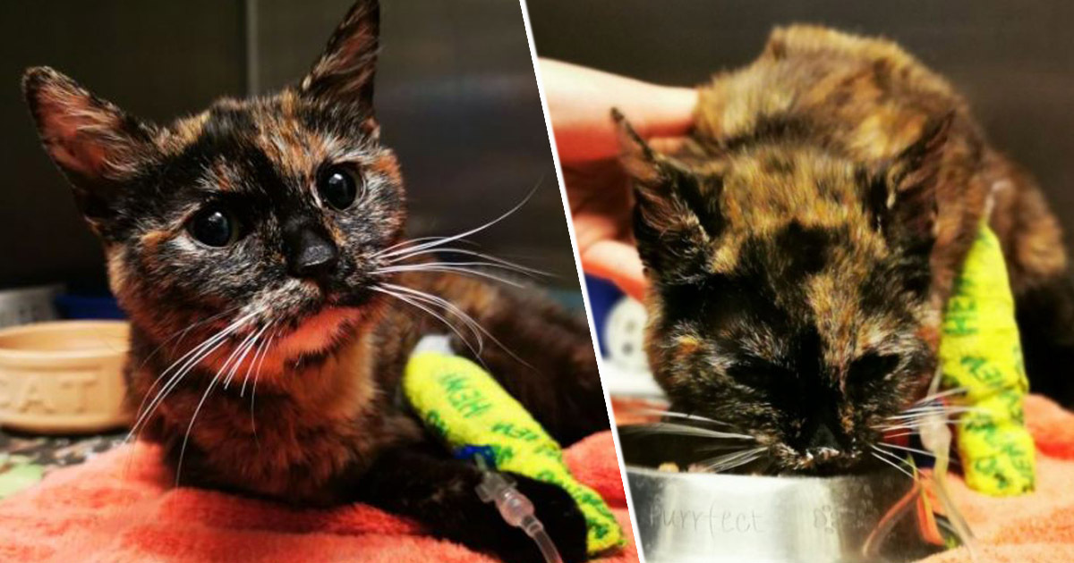 'Sexually Abused' Cat Finds Forever Home In RSPCA's 'Worst Case Ever'