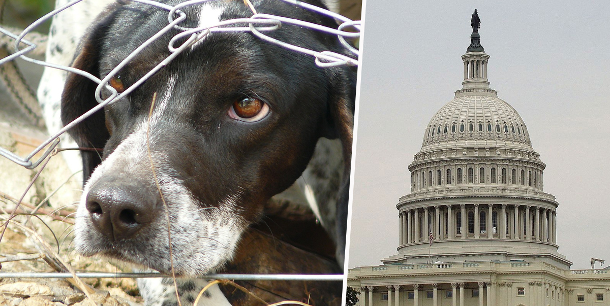 House Passes Bill To Make Animal Cruelty A Federal Crime