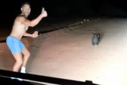 Australia Wombat Off Duty Police Officer