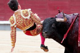 Bullfighter Groin Injury 3