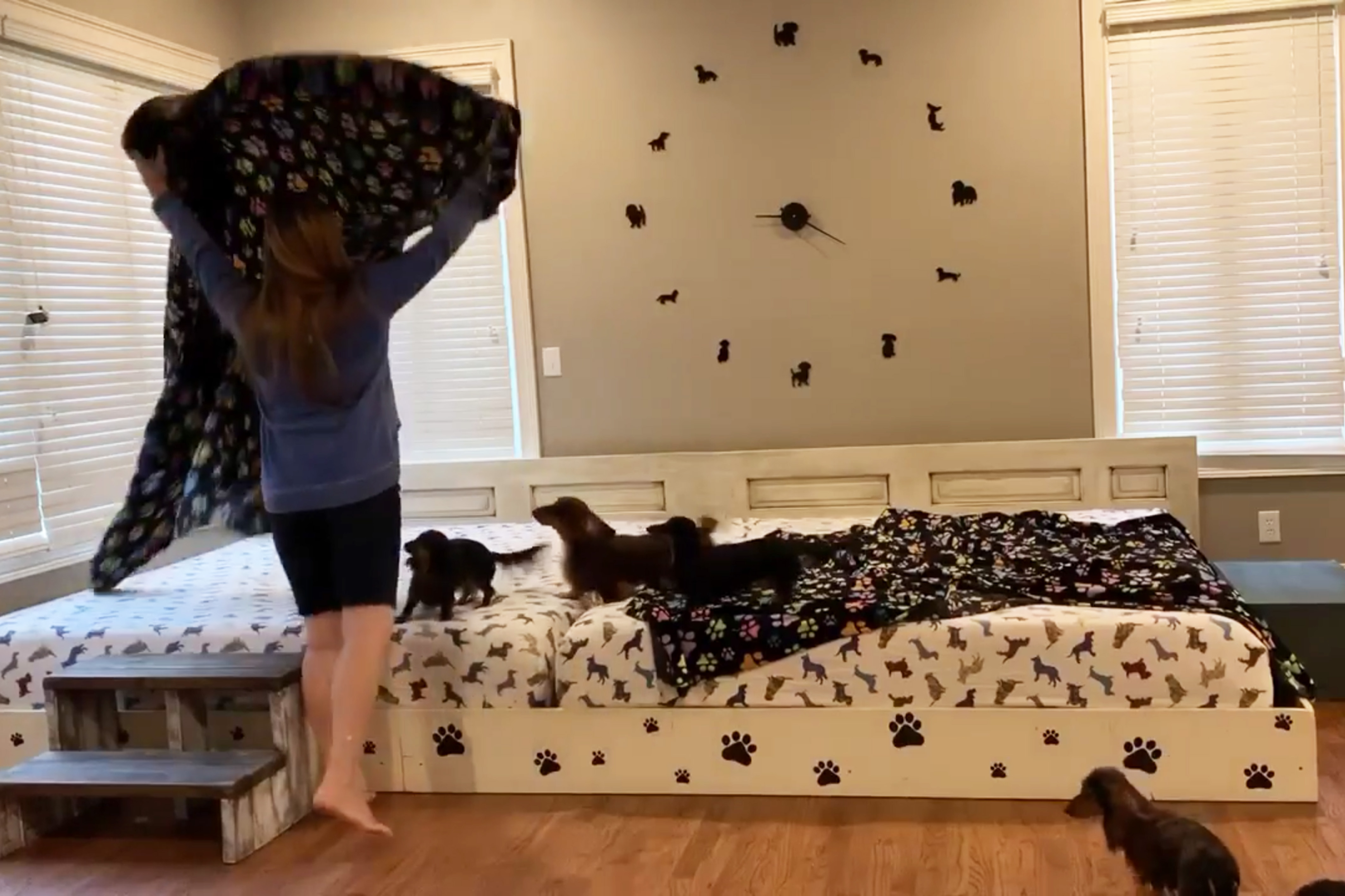 couple build 13ft bed for dogs