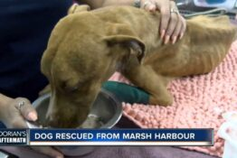 Dog rescued from hurricane debris