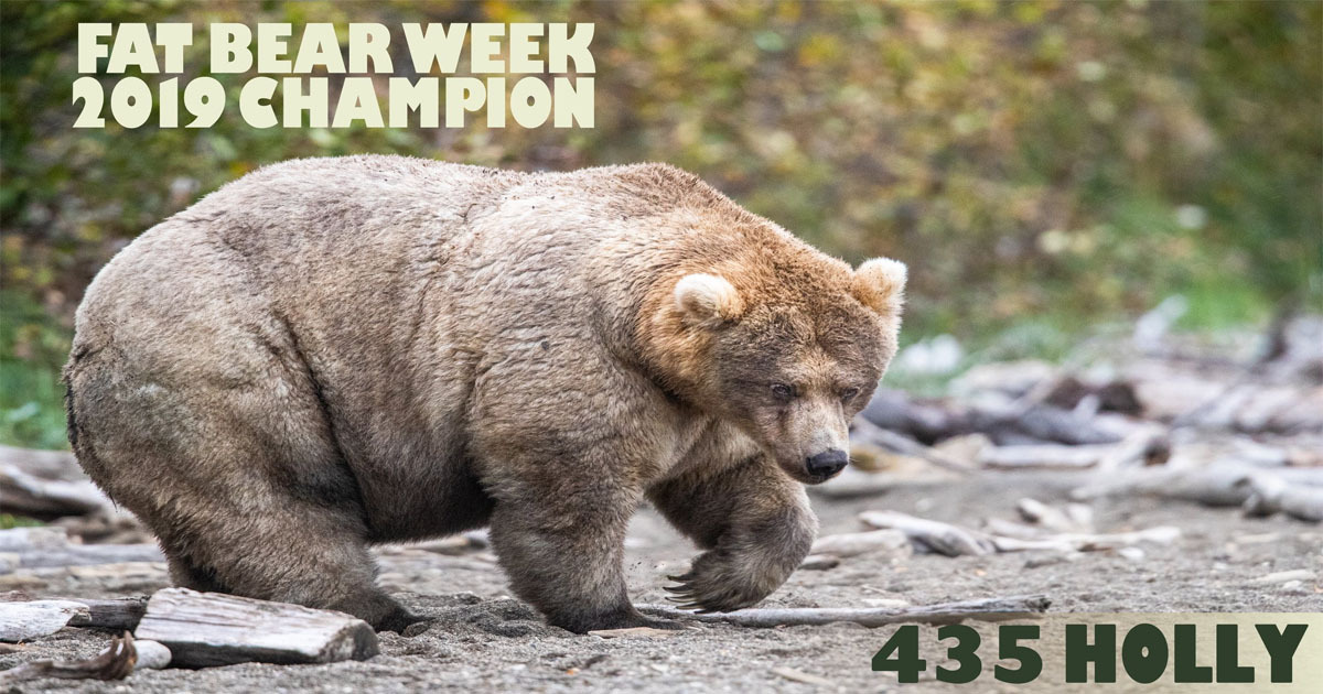 Fat Bear Week Crowns Champion And She's The Queen Of Chonk