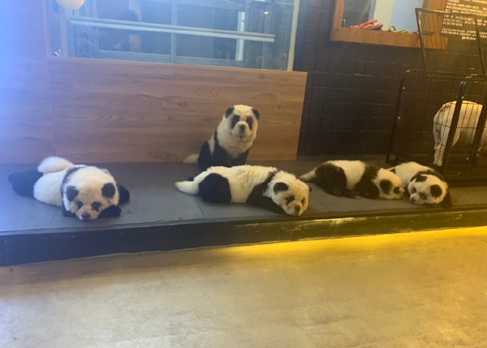 Panda Dogs AsiaWire