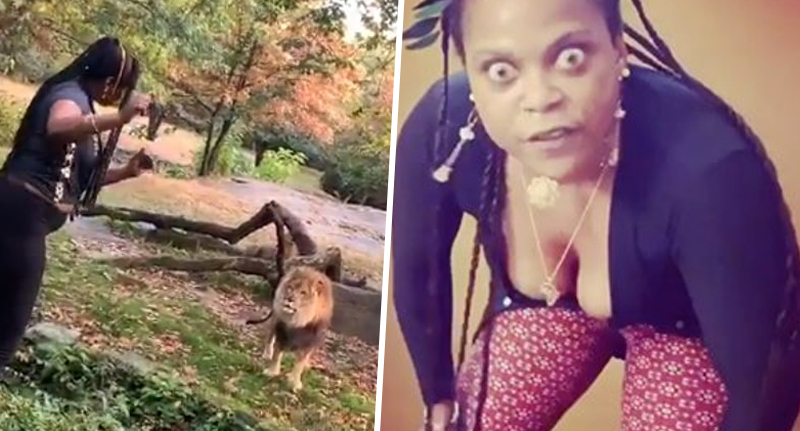Bronx Zoo Woman Who Got In With Lion Drops Rap On Instagram While Police Hunt Her