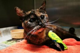 abused cat finds home