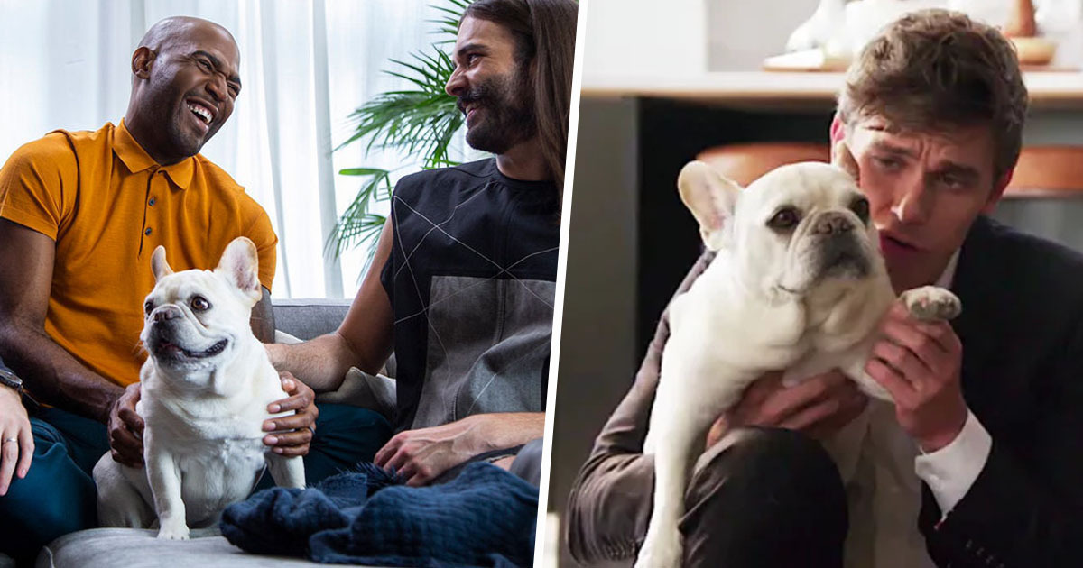 Bruley, The French Bulldog From Queer Eye, Has Died