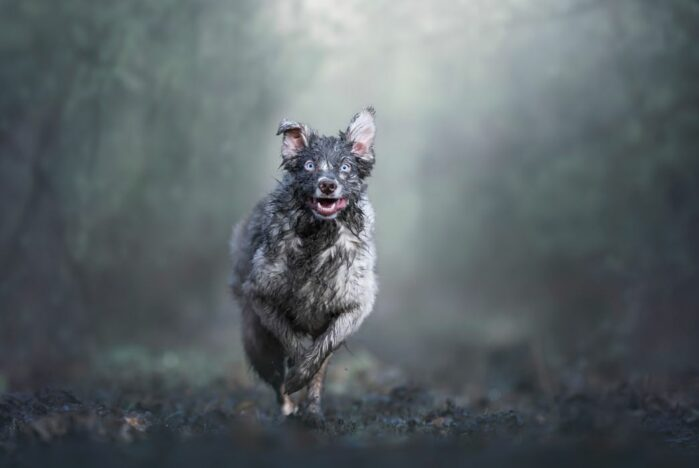 2019 Dog Photographer of the Year