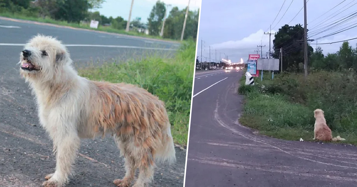 Lost Dog Waits Four Years In The Same Spot Before Being Reunited With Owners