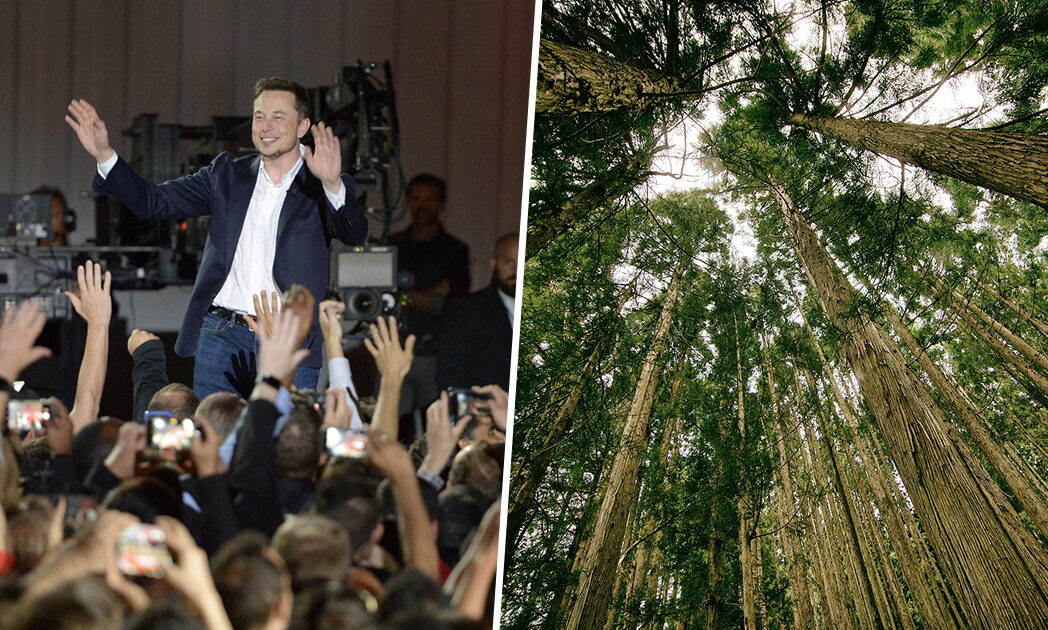 Elon Musk Has Donated $1 Million To Plant One Million Trees