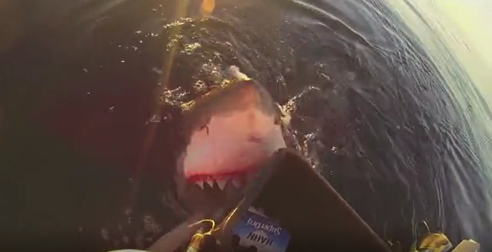 Great White Shark Stalks Fishermen Before Leaping Out Of Water To Attack