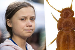 Scientists Name New Species Of Beetle After Greta Thunberg