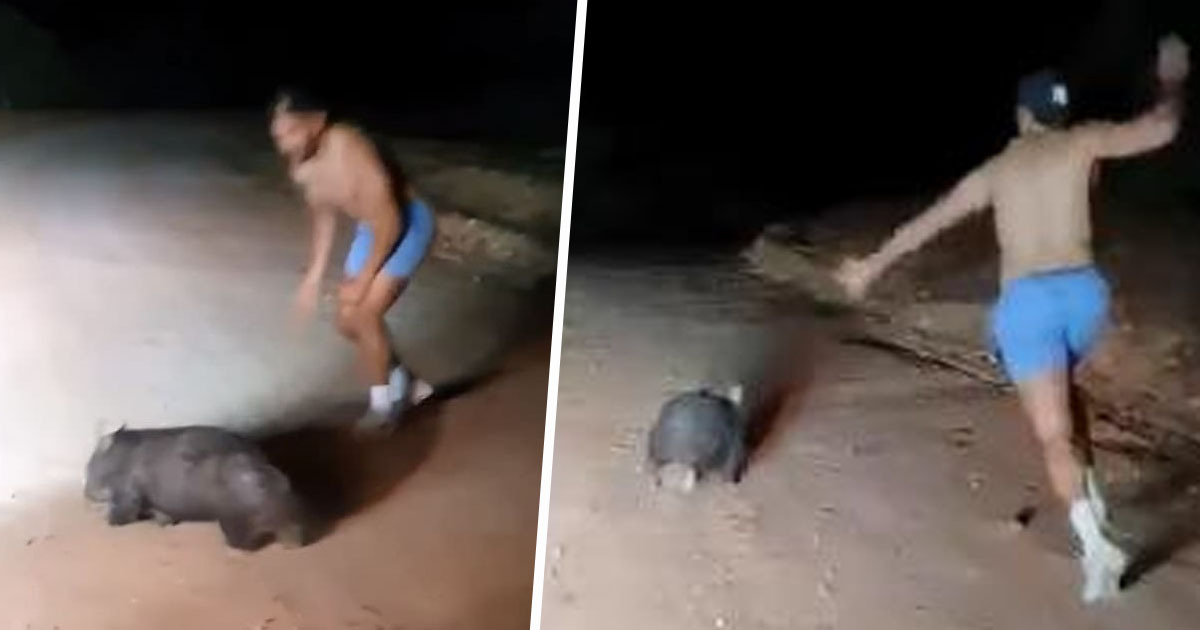 Police Officer Who Stoned Wombat To Death 'Did Nothing Wrong' Indigenous Leader Claims