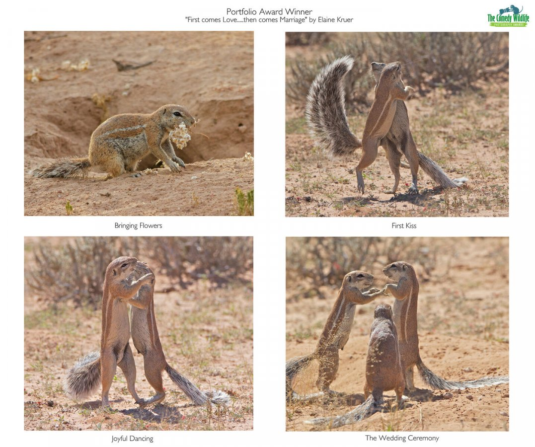 Series of photos showing animals hugging and 'getting married' for wildlife comedy awards