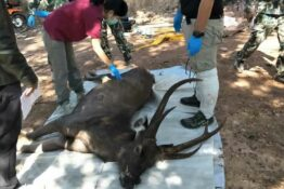 Deer found dead with plastic in stomach