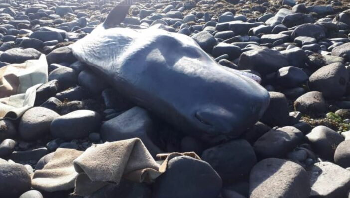 Whale Wales