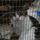 Trial Grinds To Halt As Cat Suspected Of Smuggling Drugs Escapes
