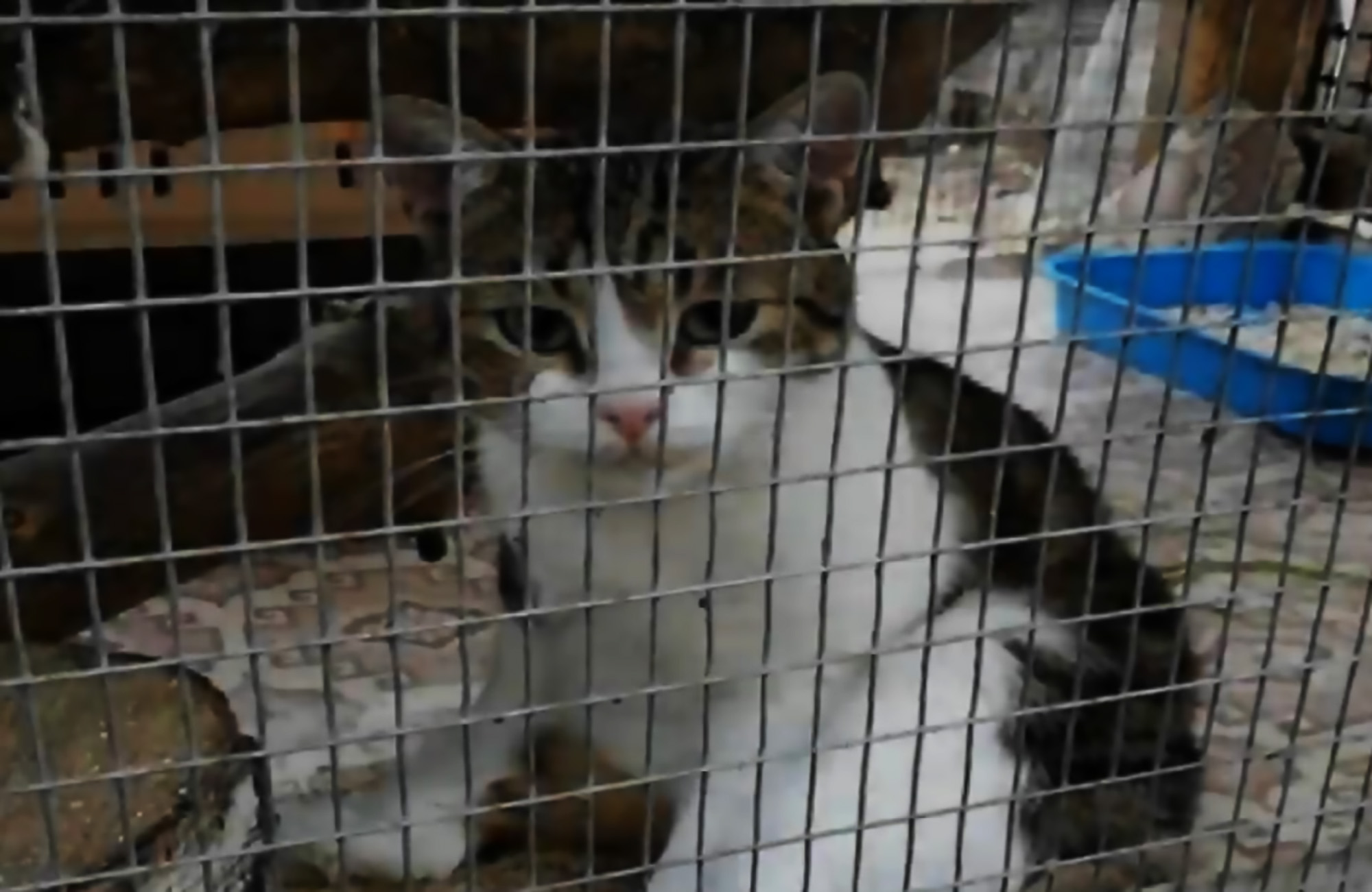Drug-smuggling cat in kitty jail