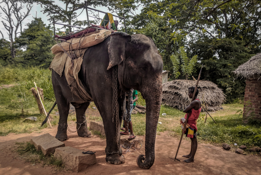 elephants kept in shocking conditions in sri lanka