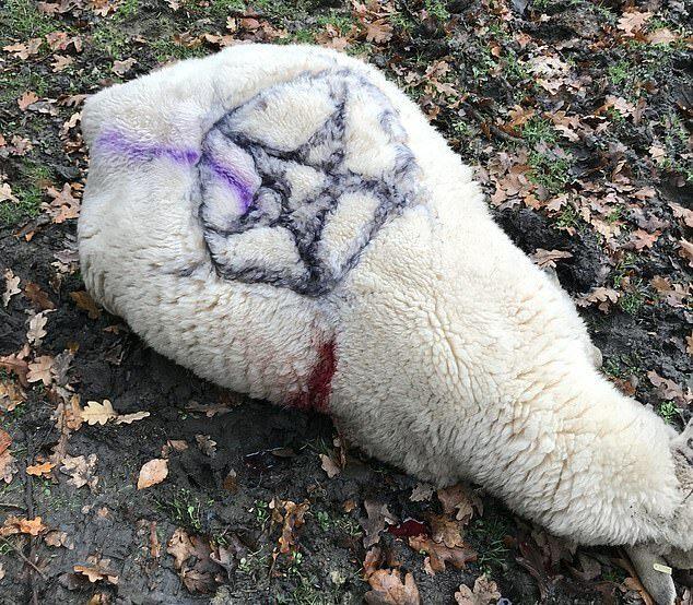 Sheep Satanic Symbols 2