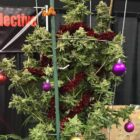 People Are Putting Up Weed Christmas Trees To Celebrate The Holiday Season