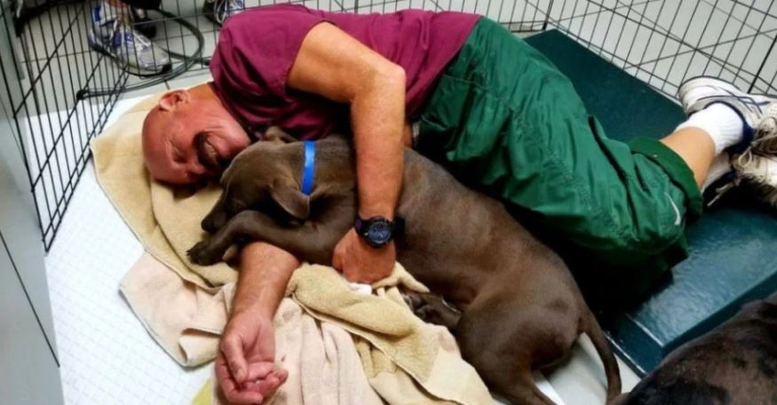Animal Shelter Offering Volunteers Dream Job Snuggling Scared Puppies