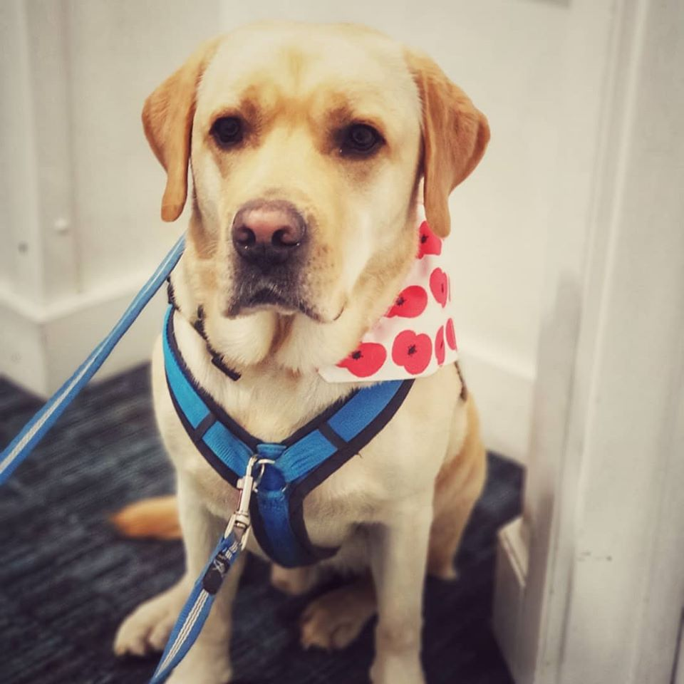 assistance dog ziggy turned away from restaurant
