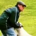 Man Caught Punching His Dog Repeatedly In Head Banned From Keeping Animals For 10 Years