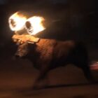 Bull Pinned Down And Set On Fire In Shocking Undercover Footage