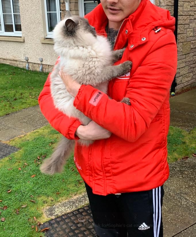Woman Steals Cat Thinking It's Missing Pet And The Outcome Is Hilarious