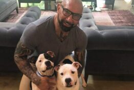 Dave Bautista adopts two pit bulls
