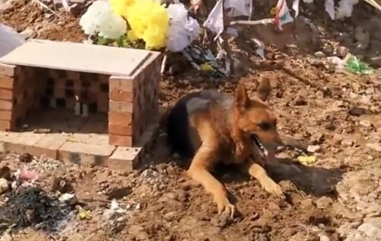 dog digs up owners grave