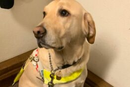 Guide dog rooted to the spot after being scared by fireworks