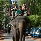 Elephant Rides At Angkor Temples Finally To Be Banned By Cambodia