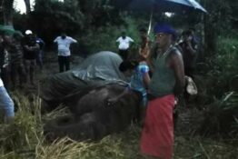 elephant dies because of tourism in sri lanka