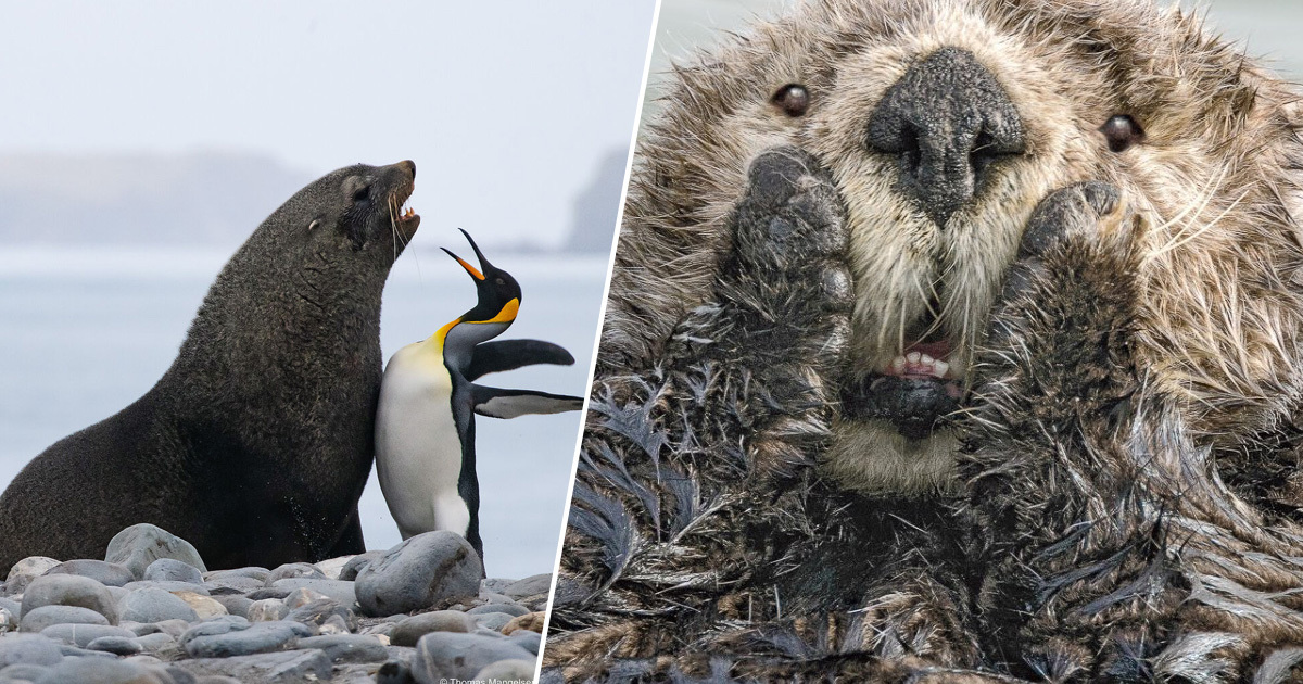 Winners Of The 2019 Comedy Wildlife Photography Awards Announced