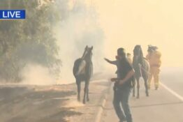 horse rescues family from fire