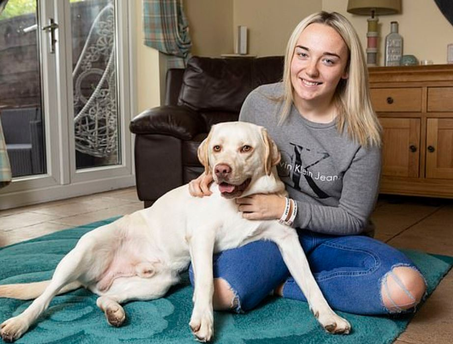 Labrador helps save owner's life when she experiences seizures