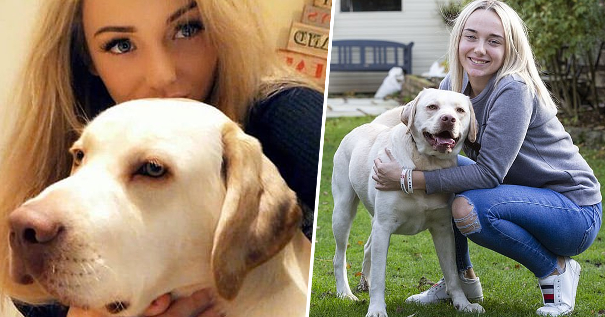 Freddie The Labrador Rescues His Human Every Single Day