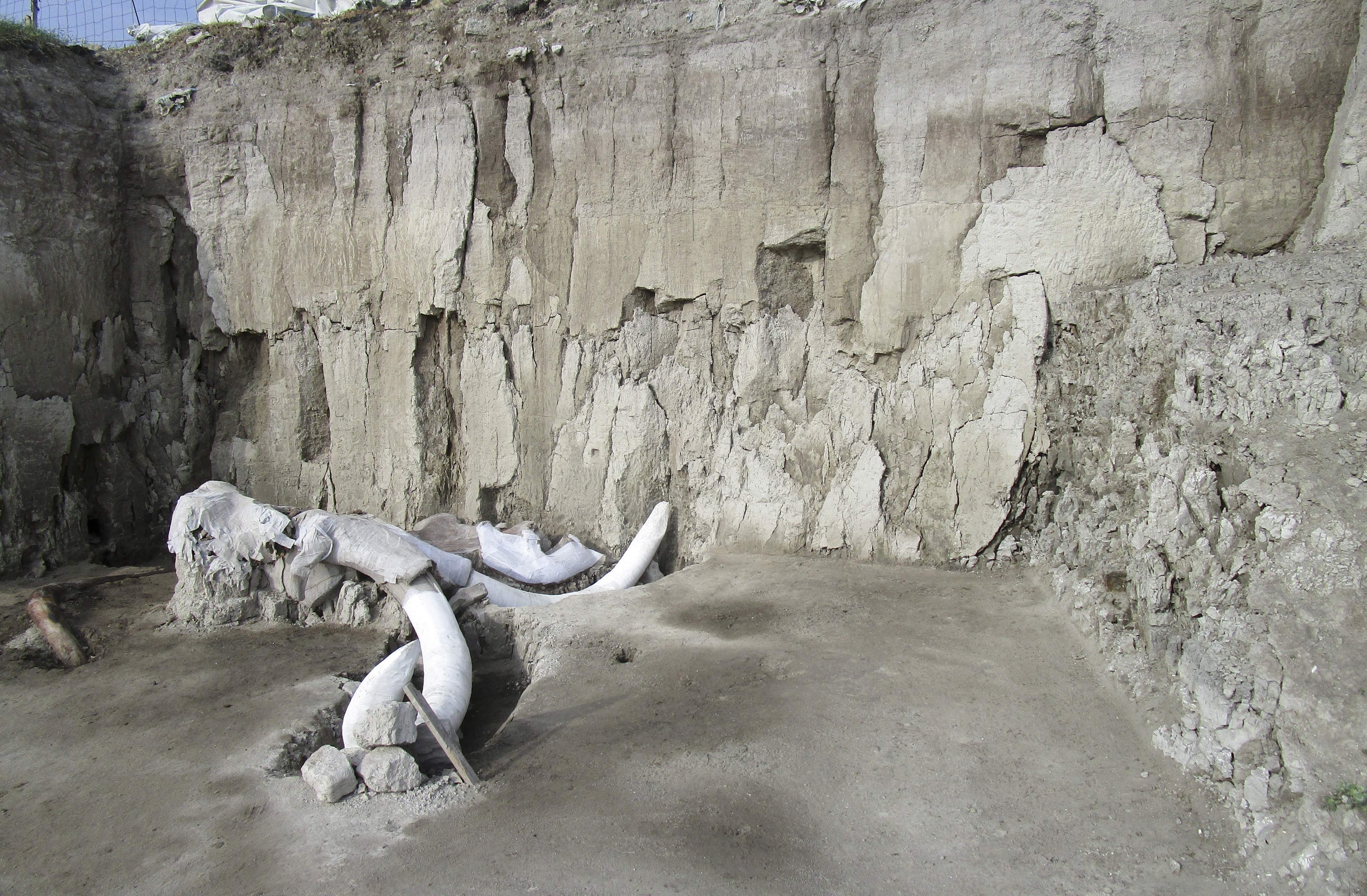 Huge Mammoth Skeletons Discovered In Human Traps In Mexico