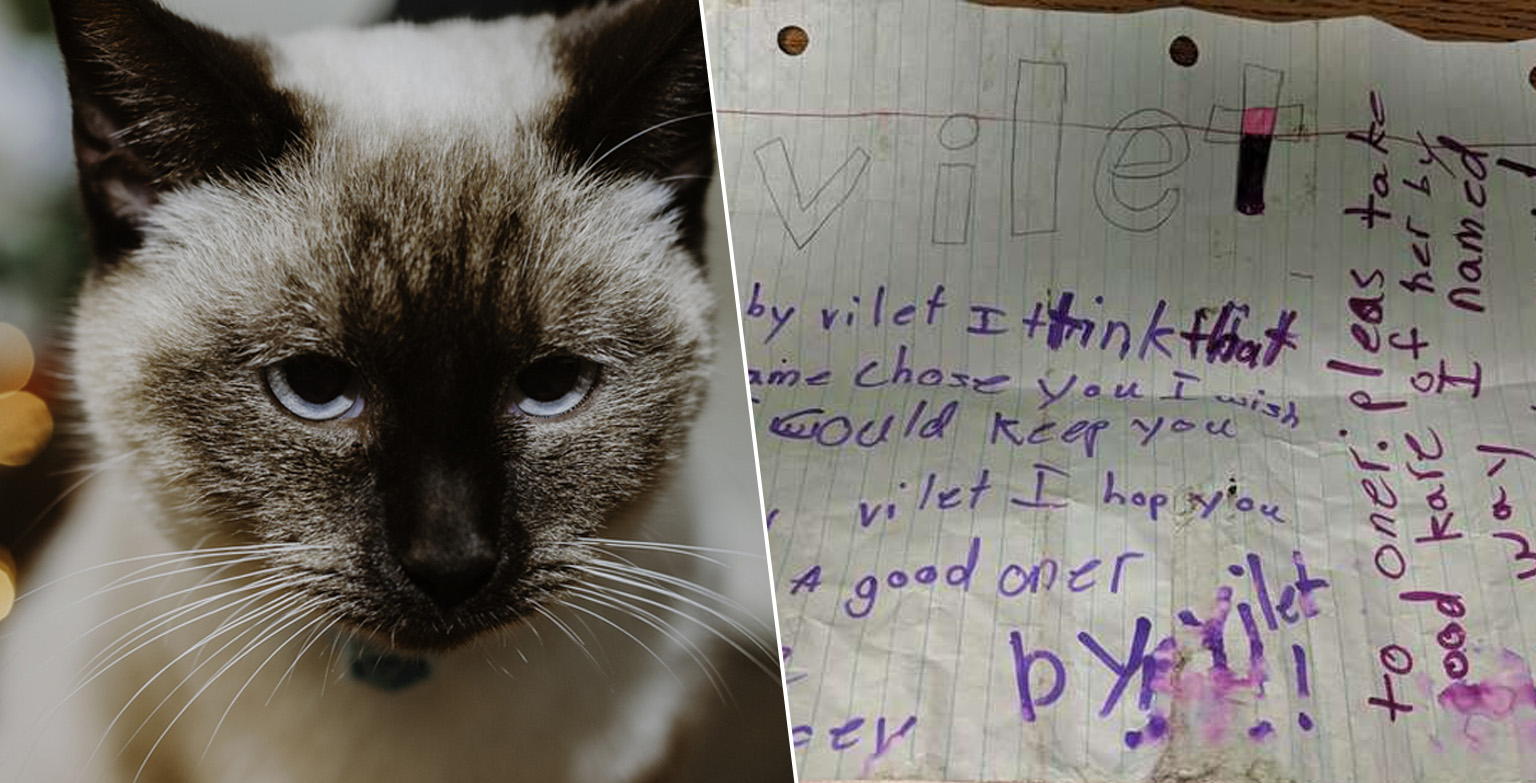 Abandoned Cat Found On Street With Heartbreaking Note Tied To Collar