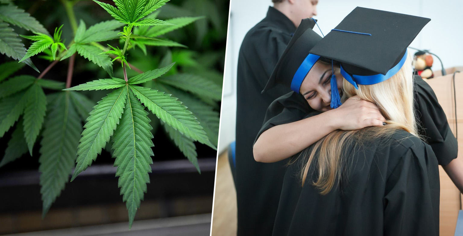Universities Are Rolling Out Degrees In Cannabis