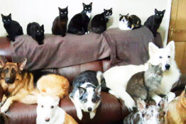 17 Pets One Photo