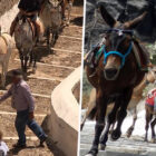 Greek Government To Hand Out £25,000 Fines For Mistreating Donkeys For Tourist Rides
