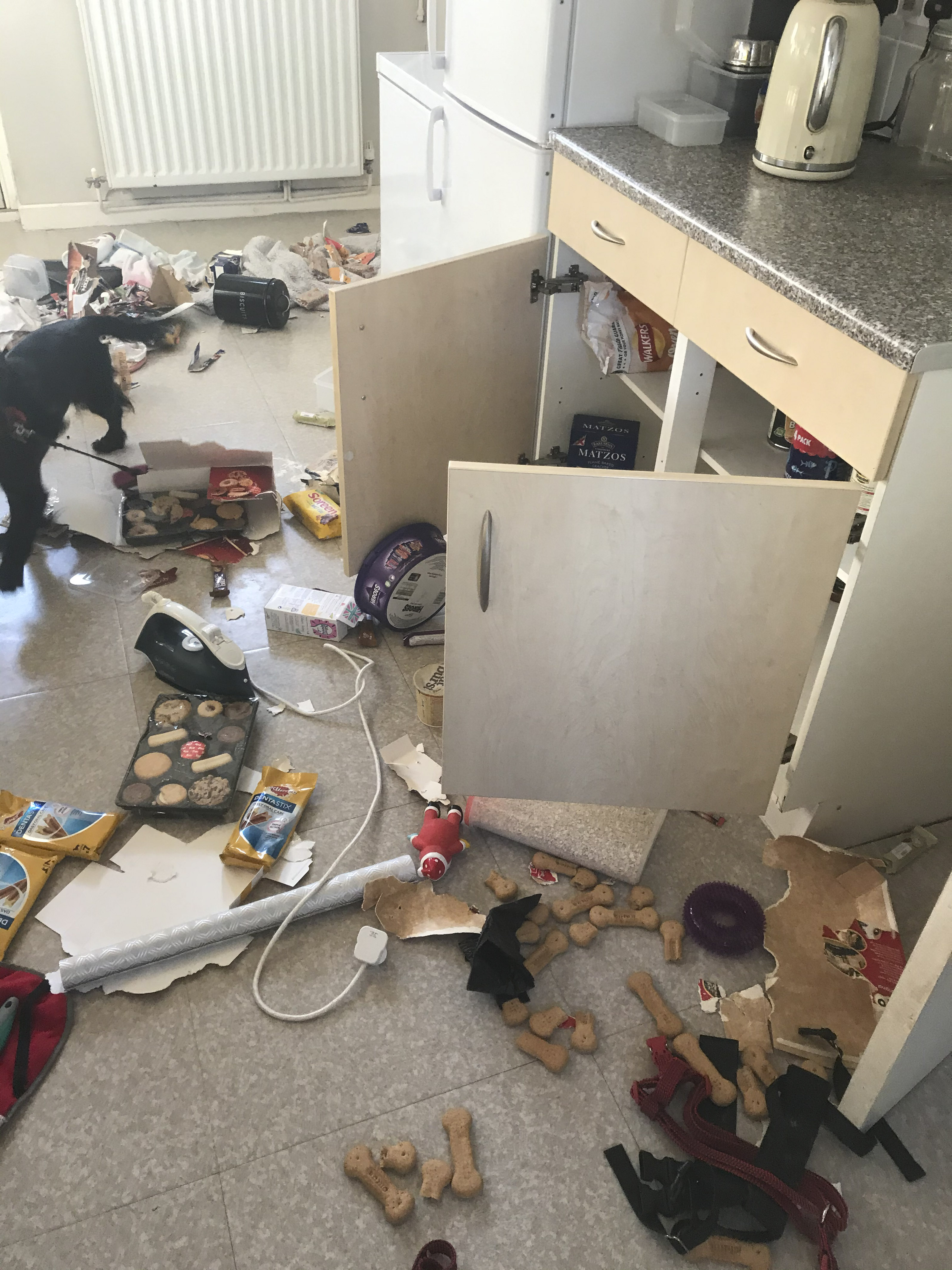 Kitchen covered in food and rubbish after dog goes on a rampage