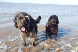 Dogs who discovered ancient skeleton on beach