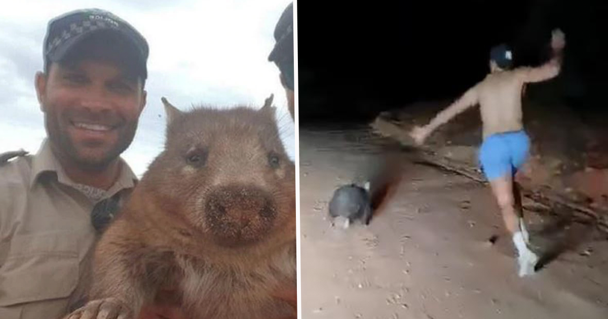 Cop Who Laughed While Stoning Wombat To Death Will Not Be Charged