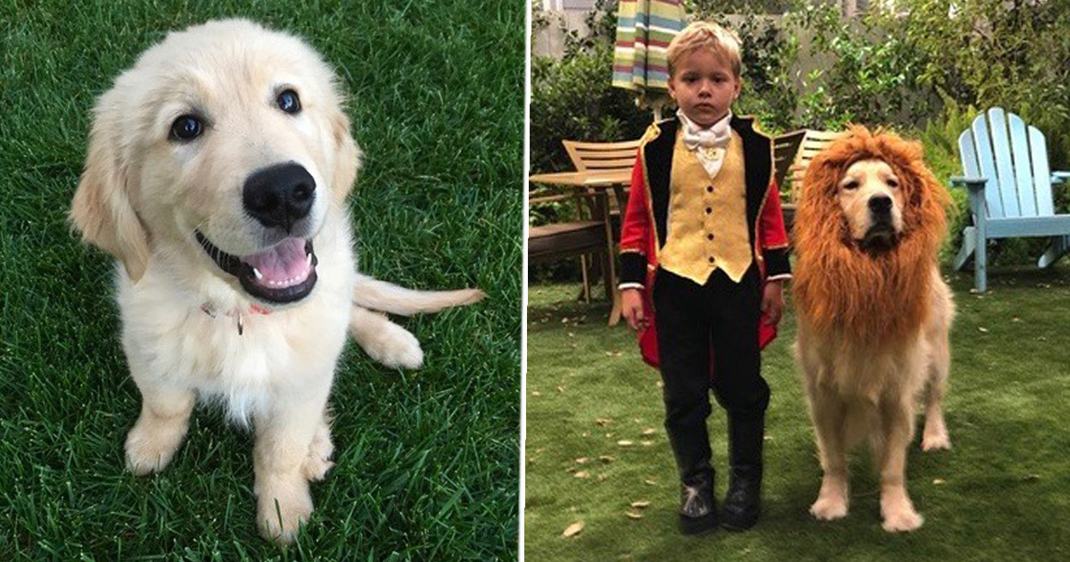 Cosmo The Dog From Netflix's Fuller House Has Died And Cast Are Heartbroken
